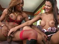 Busty shemales tasting each other thick cocks